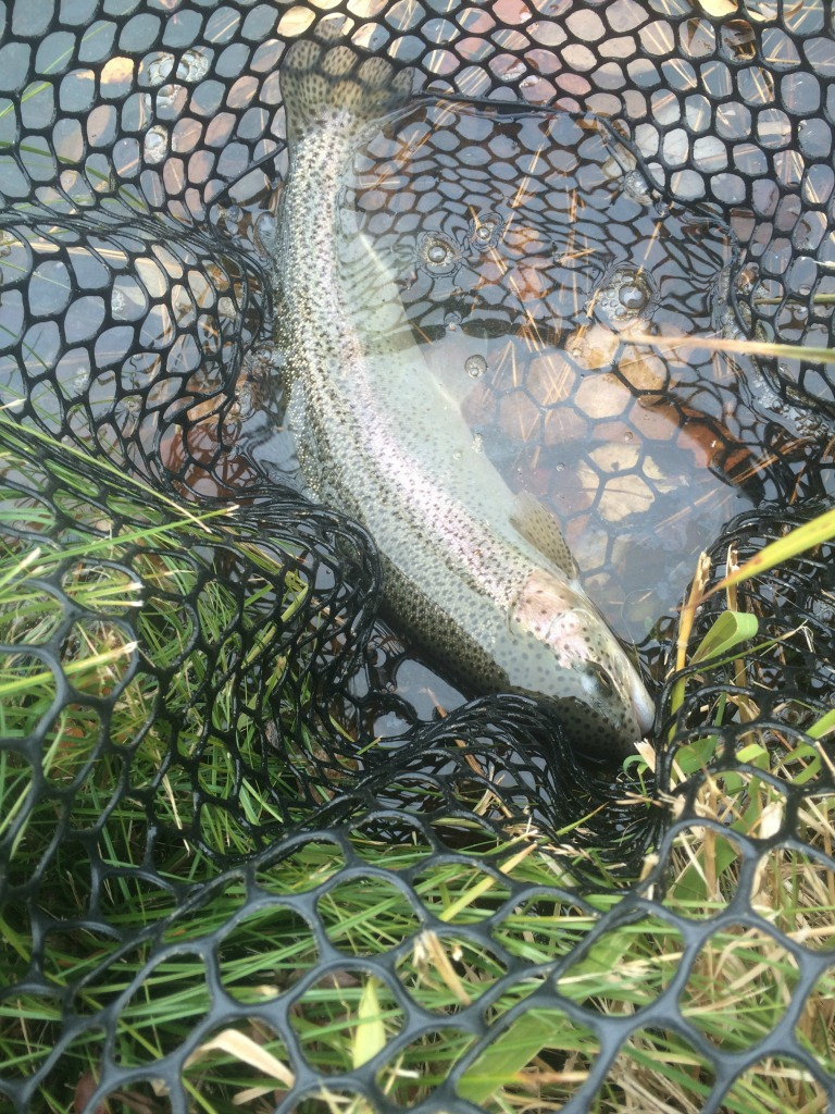 clearwater trout 2 (1024)