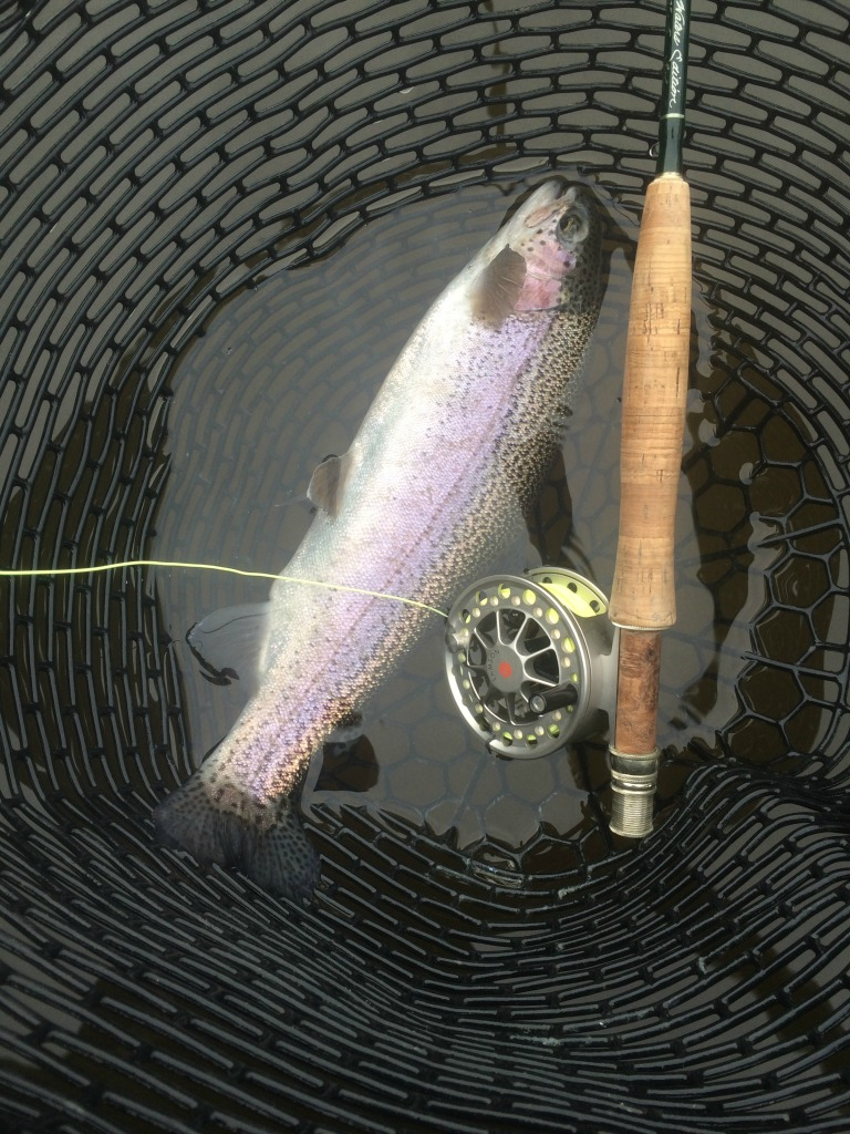 clearwater trout 3 (1024)